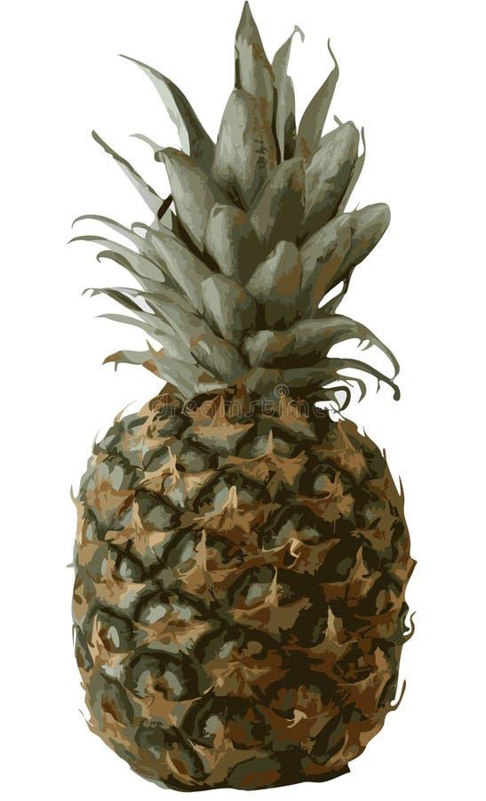 wizerunku ananas ilustracji
