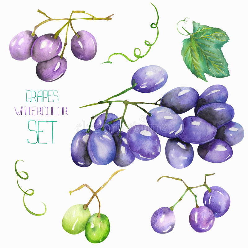 Wizerunku owocowy ustawiający z odosobnioną akwareli wiązką winogrona, owocowi elementy Malujący pociągany ręcznie w akwareli na  ilustracja wektor