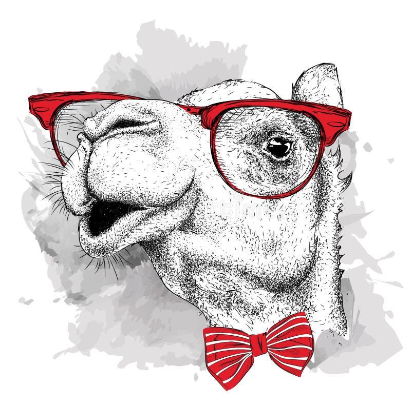Wizerunku portreta wielbłąd w cravat z szkłami i również zwrócić corel ilustracji wektora ilustracji
