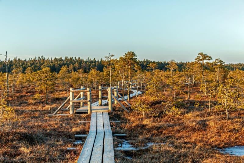Wlec wzdłuż drewnianych przejść przez moorland w Kemeri parku narodowym, Jurmala Naturalny tło z naturą Latvia, obraz stock