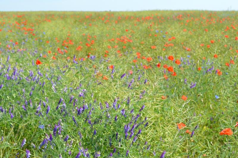 Wlid fält arkivbild