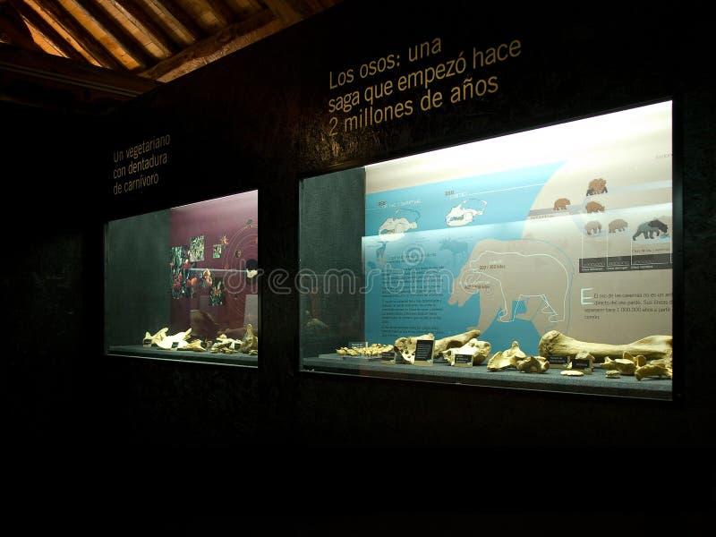 Wnętrze jama niedźwiedzia muzeum w Pyrenees zdjęcie royalty free