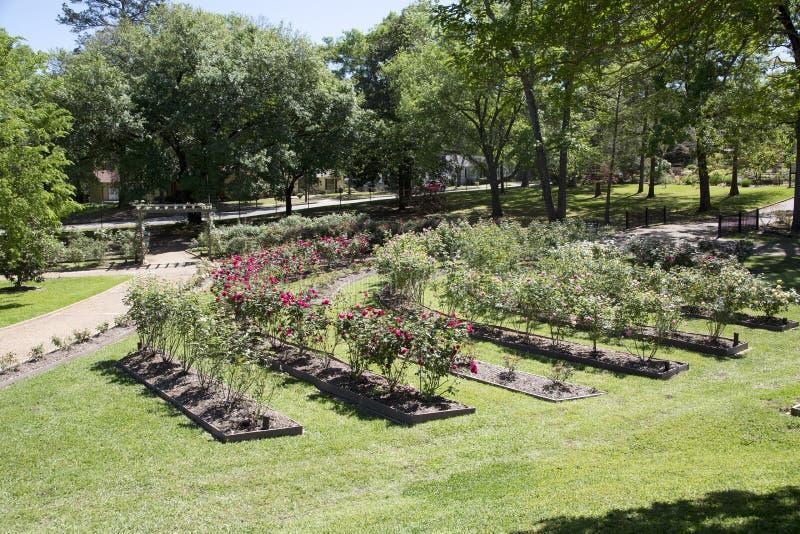 Wnętrze ogród różany w Tyler Teksas fotografia stock