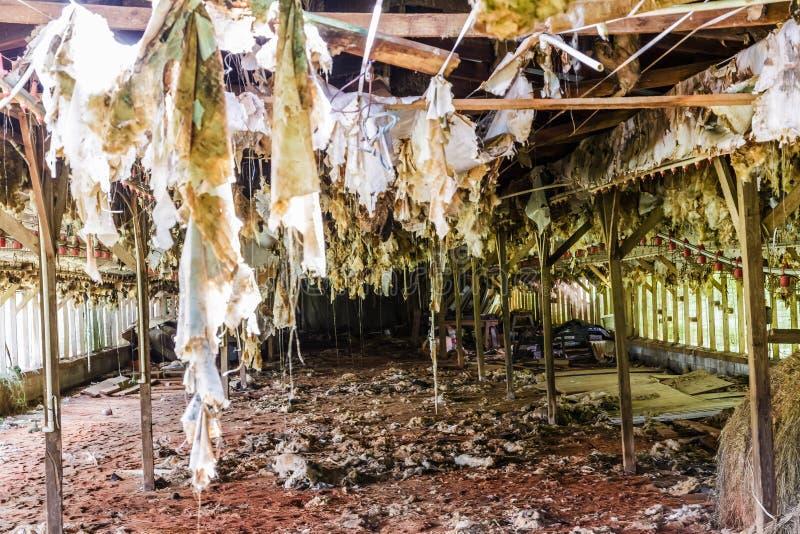 Wnętrze Stary Zaniechany kurczaka dom zdjęcia royalty free