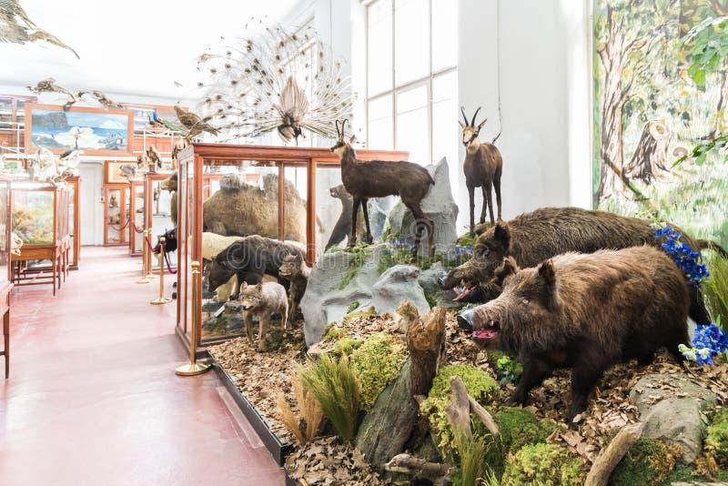 Wnętrze Zoologiczny muzeum Cluj obraz stock