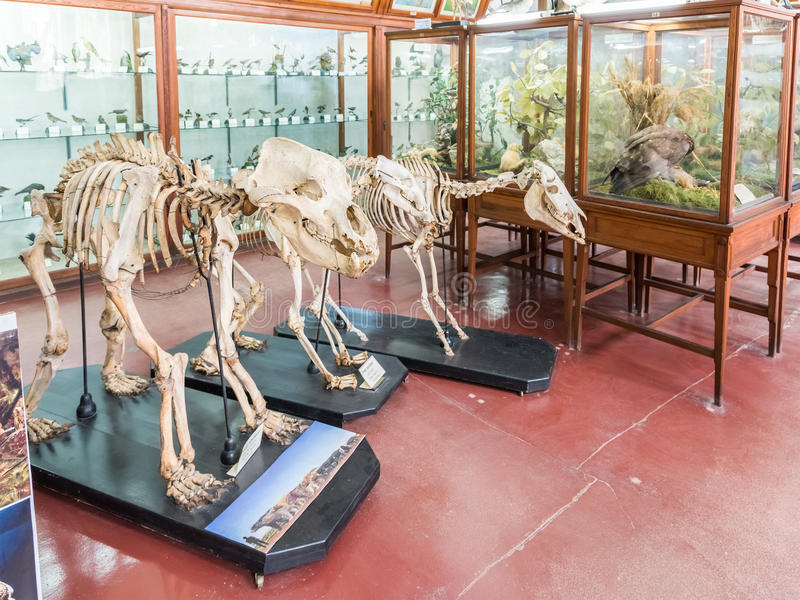 Wnętrze Zoologiczny muzeum Cluj obrazy stock