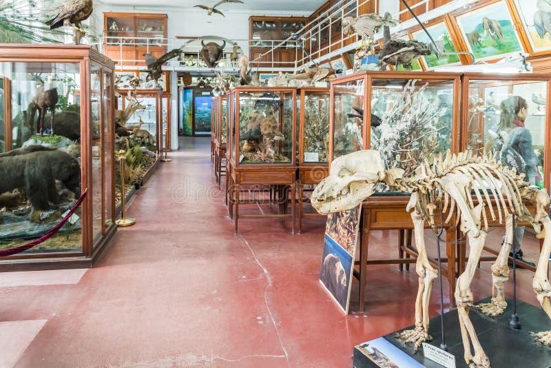 Wnętrze Zoologiczny muzeum Cluj zdjęcie stock