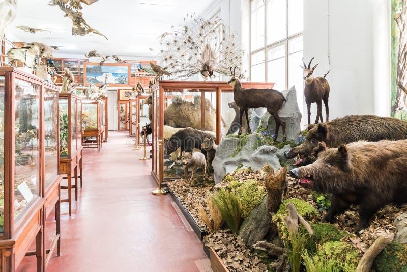 Wnętrze Zoologiczny muzeum Cluj obraz royalty free