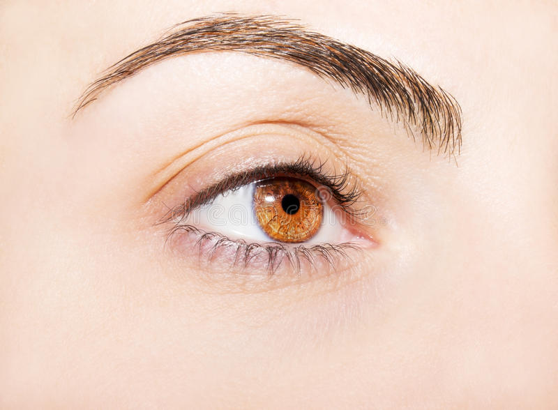 Wnikliwy spojrzenie na brown oku zdjęcie royalty free