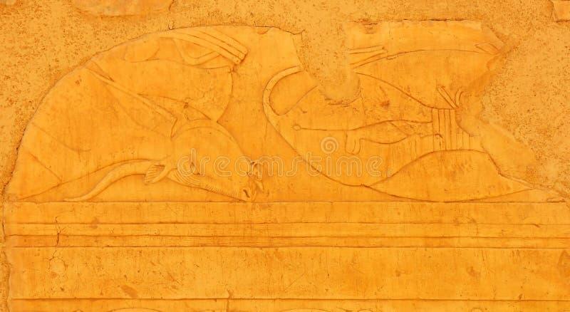 wołowina egipcjanin obraz royalty free