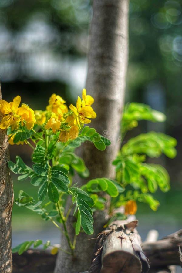 Wo Blumen blühen, so hofft lizenzfreies stockfoto