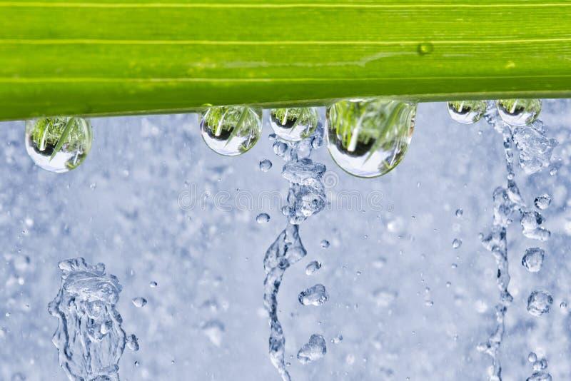 Download Wod krople na liściu obraz stock. Obraz złożonej z jaskrawy - 33516499