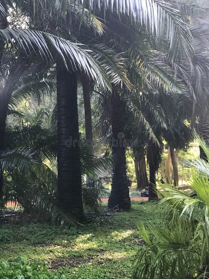 Woda emituje światło przez drzewek palmowych fotografia stock