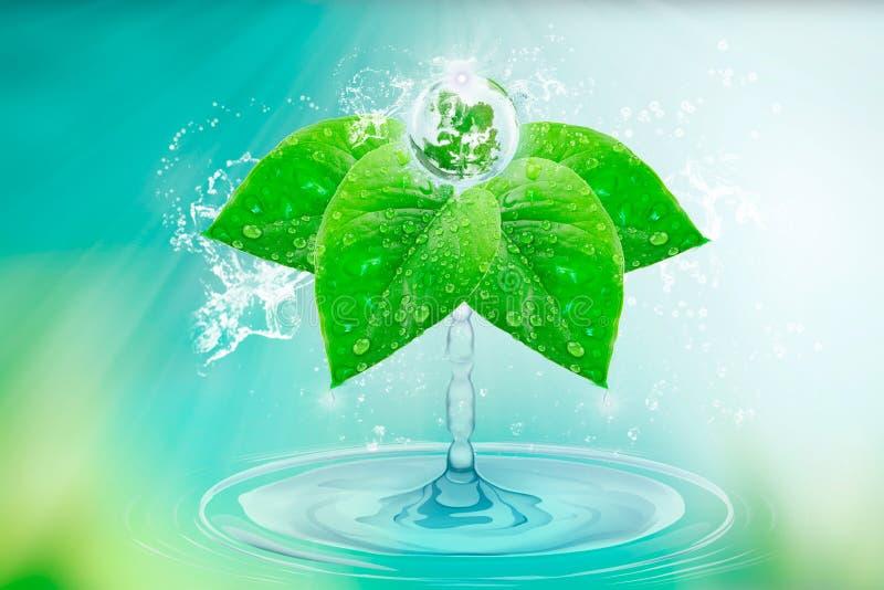 Woda jest życiem Pluśnięcia czysta woda Dają narodziny planeta na zielonych liściach z kroplami i pluśnięciami Tapeta dzień zdjęcie royalty free