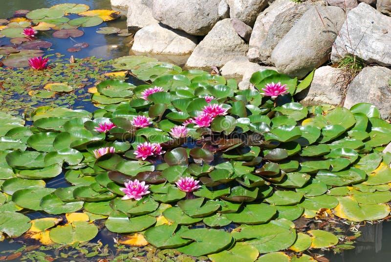 Woda kwiaty zdjęcia stock