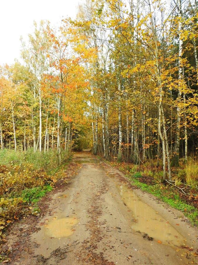 Woda na drogowych i kolorowych jesieni drzewach, Lithuania obrazy royalty free
