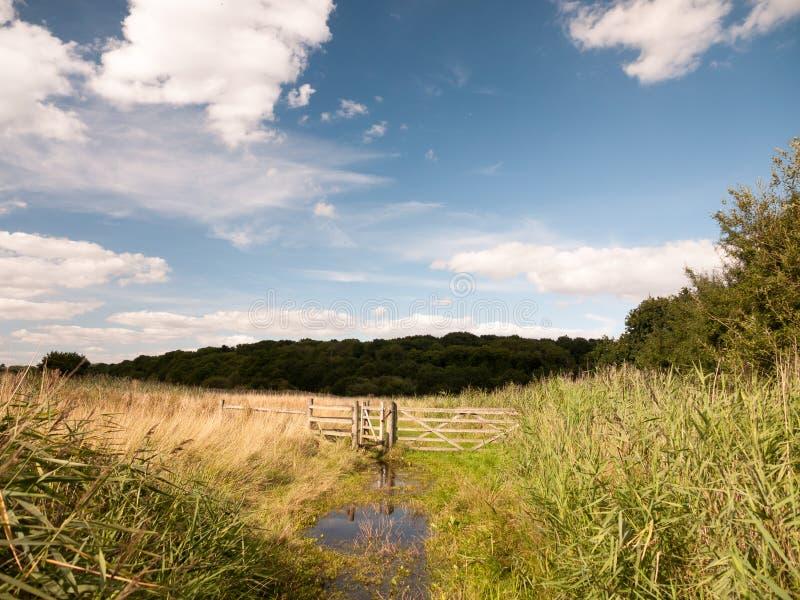 Woda notująca kraju spaceru łąkowa scena z drewnianym ogrodzeniem i g zdjęcie royalty free