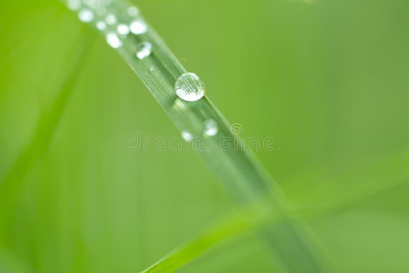 Woda opuszcza na trawie w naturze z pięknym bokeh obrazy royalty free