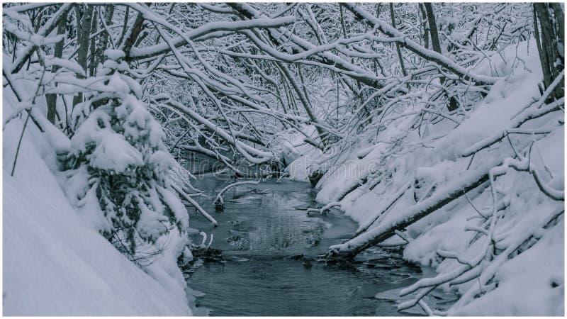 Woda rusza się przez lasu obrazy stock