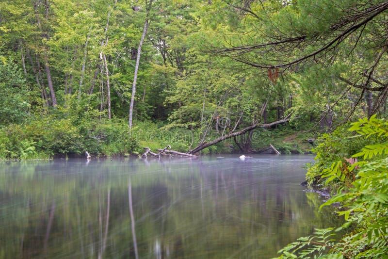 Woda Rzeczna chyły Przez Zwartego lasu obraz stock