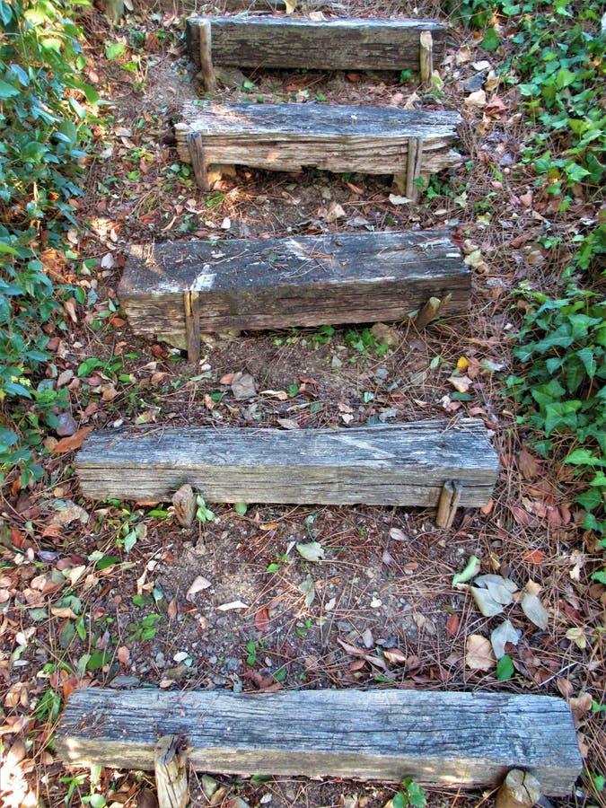 Wodden trappa i en skog arkivfoto