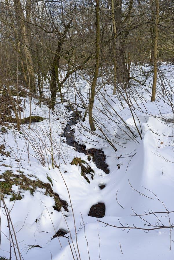 Wodland Stream in Snow. Charterhouse, Mendip Hills royalty free stock photos