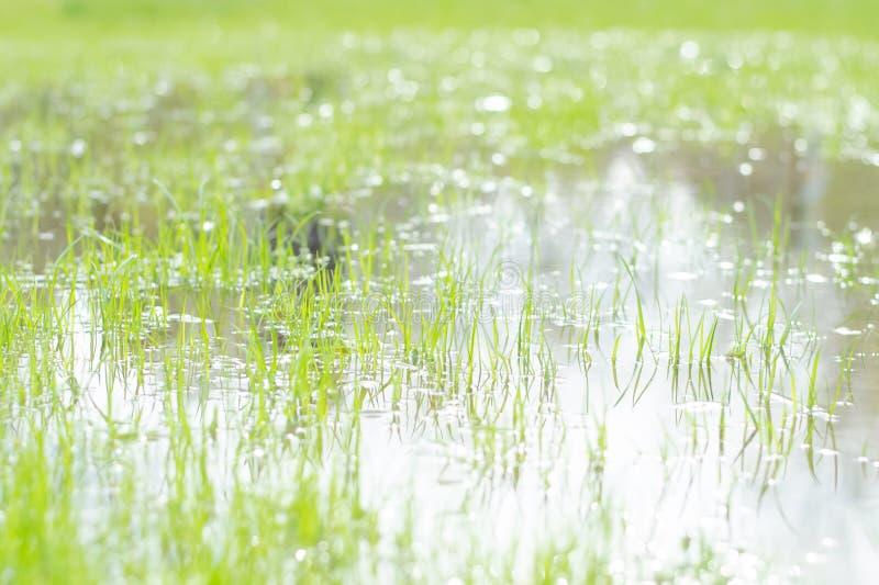 Wodna łąka w wiosny zbliżeniu abstrakcyjny tło kosmos kopii fotografia stock