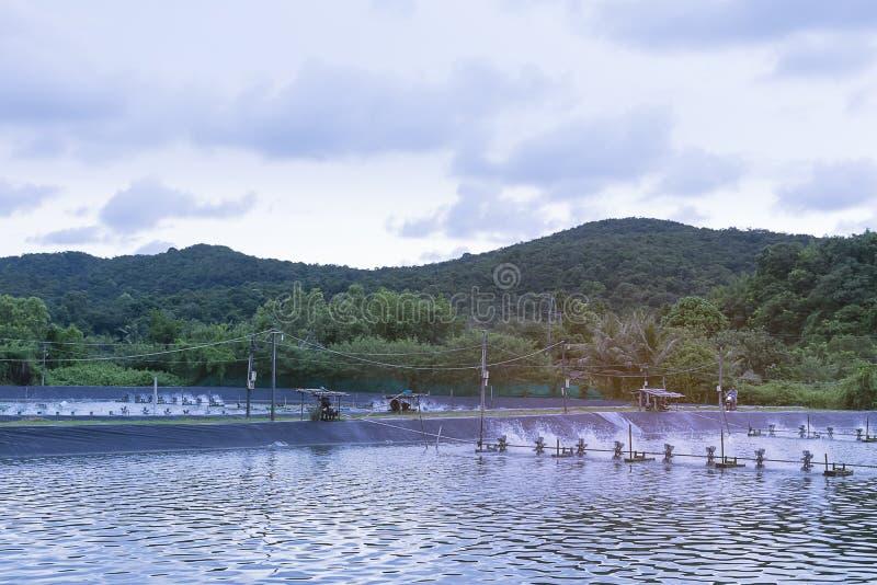 Wodna napowietrzenie turbina w uprawiać ziemię nadwodny Garneli i ryba wylęgarni biznes obraz stock