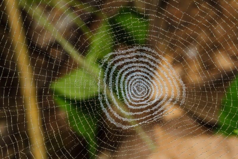 Wodne kropelki na pająka gniazdeczku zdjęcie stock