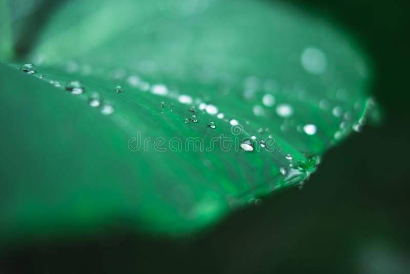 Wodne kropelki na plant&-x27; s liść po deszczu zdjęcie stock
