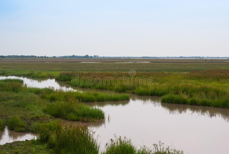 Wodnej i zielonej trawy bagna z plamy niebem, natury t?o zdjęcie stock