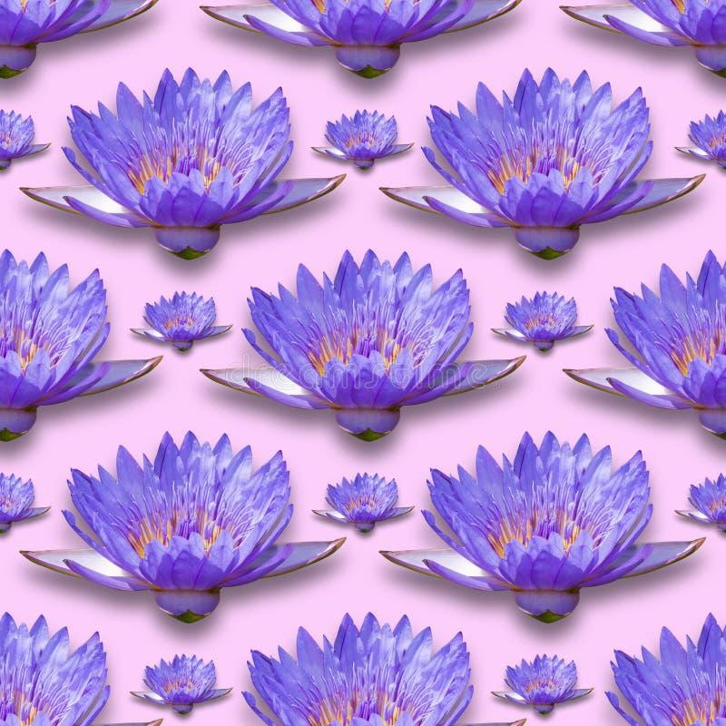 Wodnej lelui wzór zdjęcie royalty free