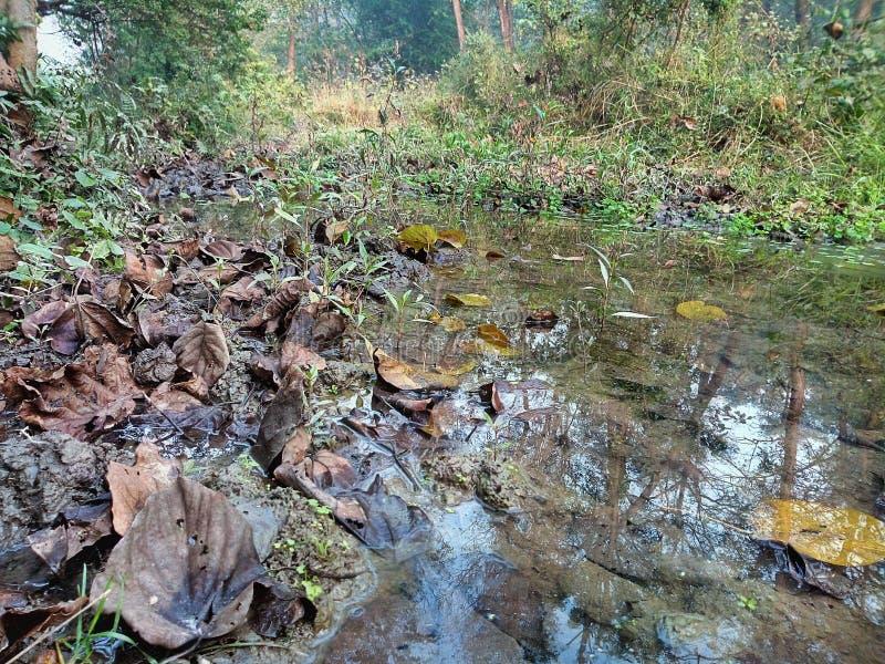 Wodni i falled liście w stawie obrazy royalty free
