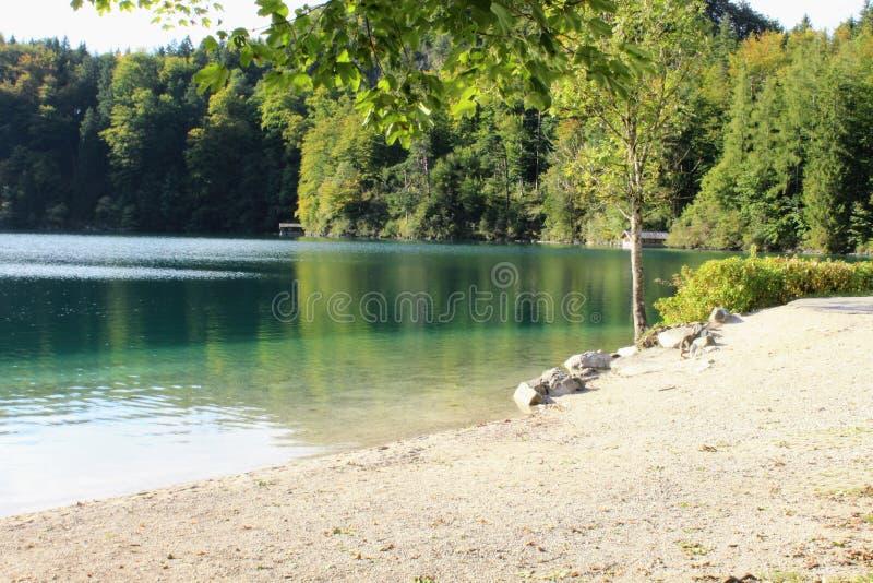 Wodni i zieleni drzewa na jeziorze fotografia stock