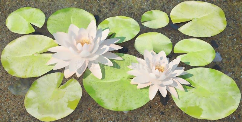 Wodni lilys na jeziorze fotografia royalty free
