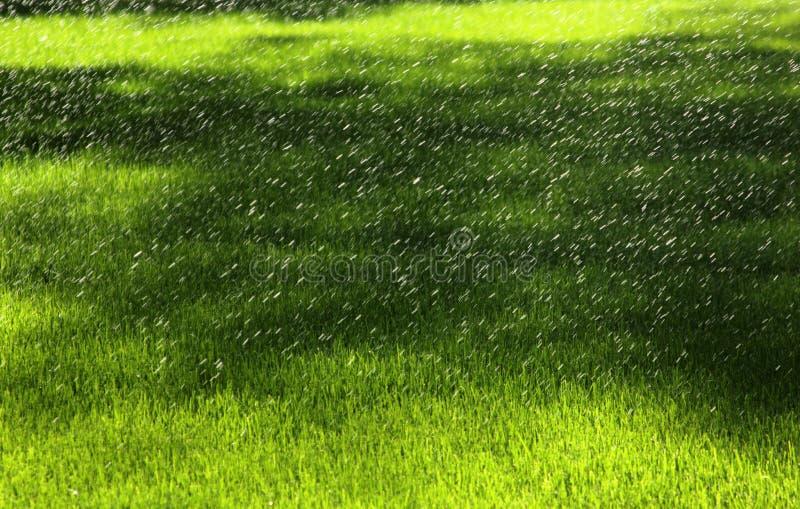 Wodni sprinkers w polu obrazy royalty free