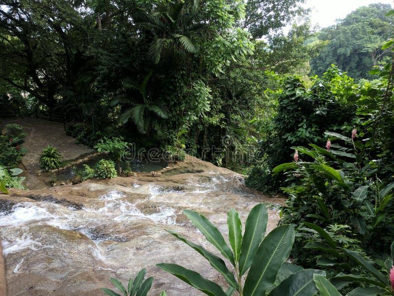Wodny gnanie siklawa przy Konoko Spada w Jamajka obraz royalty free