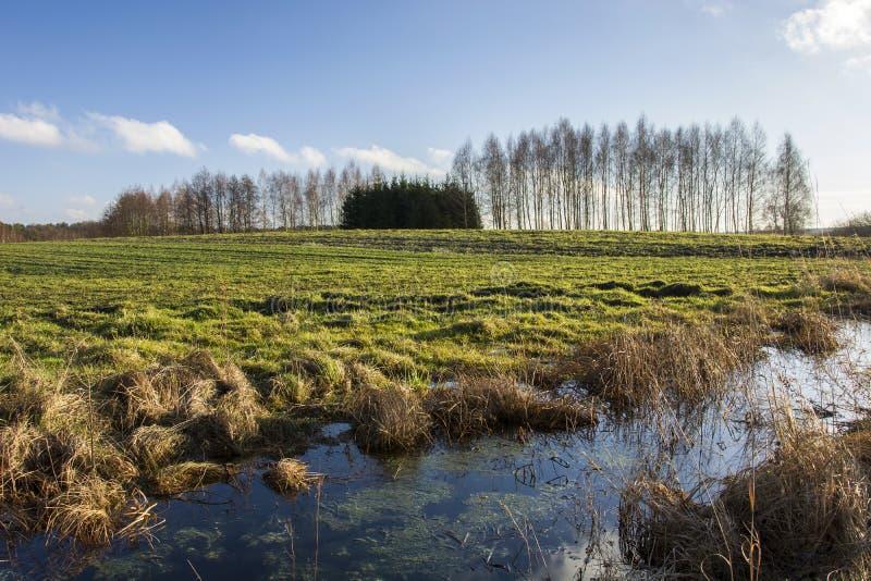 Wodny kanał zielonym polem i lasem obraz royalty free