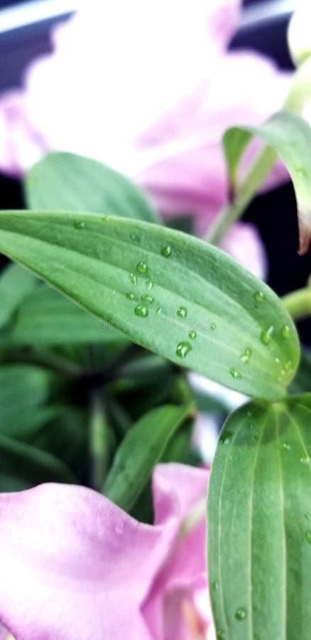 Wodny opadowy kwiat zdjęcie royalty free