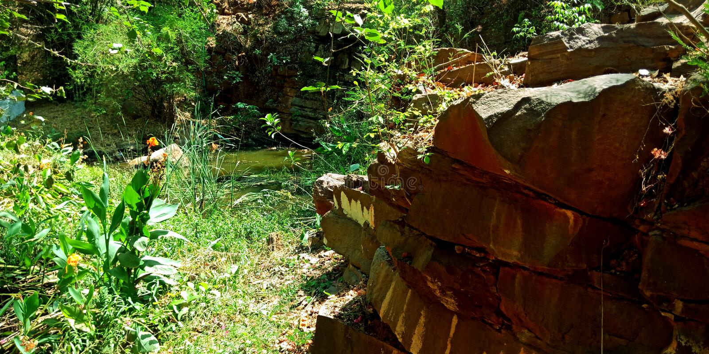 Wodny park z pięknego rośliny zielonego środowiska atrakcyjnymi skałami kwitnie staw fotografia stock