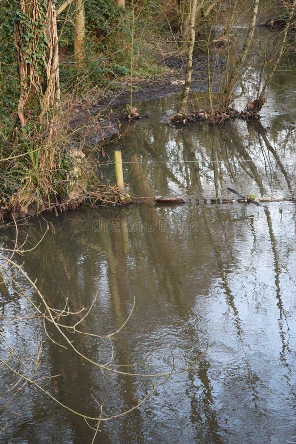 Wodny przelew od rzecznego dopływu powoduje woda powodziowa dreanching krajobraz drzewa w polu obrazy stock