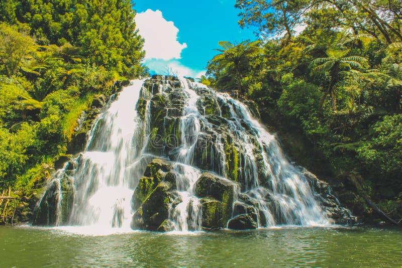 Wodospad Owharoa na północnej wyspie Nowej Zelandii obrazy stock