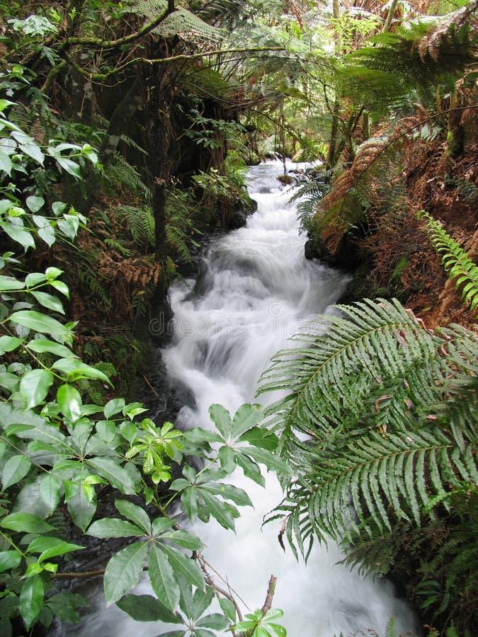 wodospady dzikiej przyrody fotografia stock
