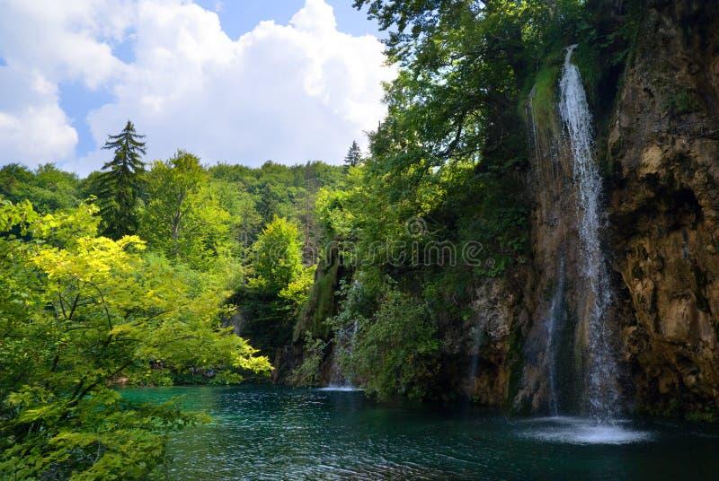 wodospady leśne zdjęcia stock