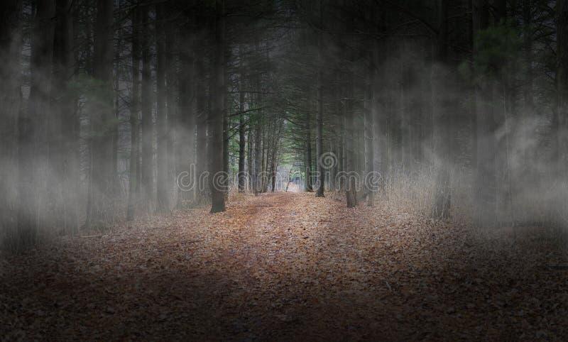 Wods foncé, forêt, brouillard, fond, surréaliste photos stock
