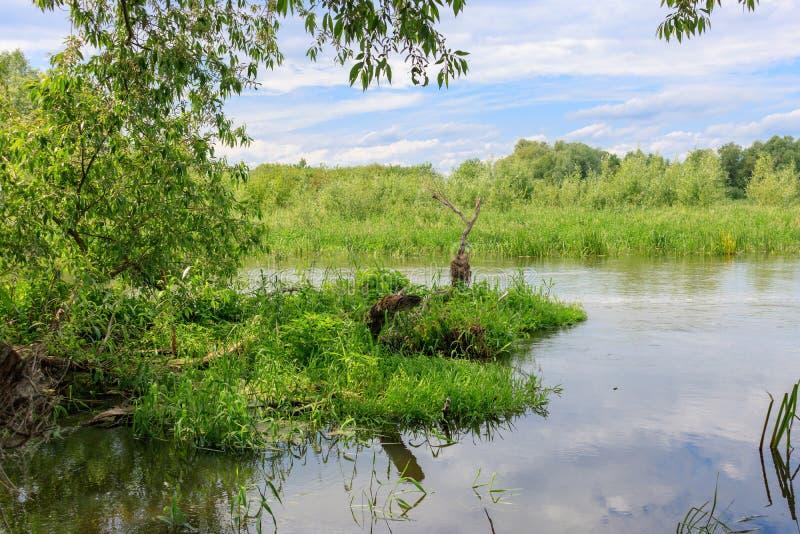 Wody rzecznej powierzchnia na tle zielonej trawy wyspy przeciw niebieskiemu niebu z chmurami przy pogodnym letnim dniem Rzeka kra obraz royalty free