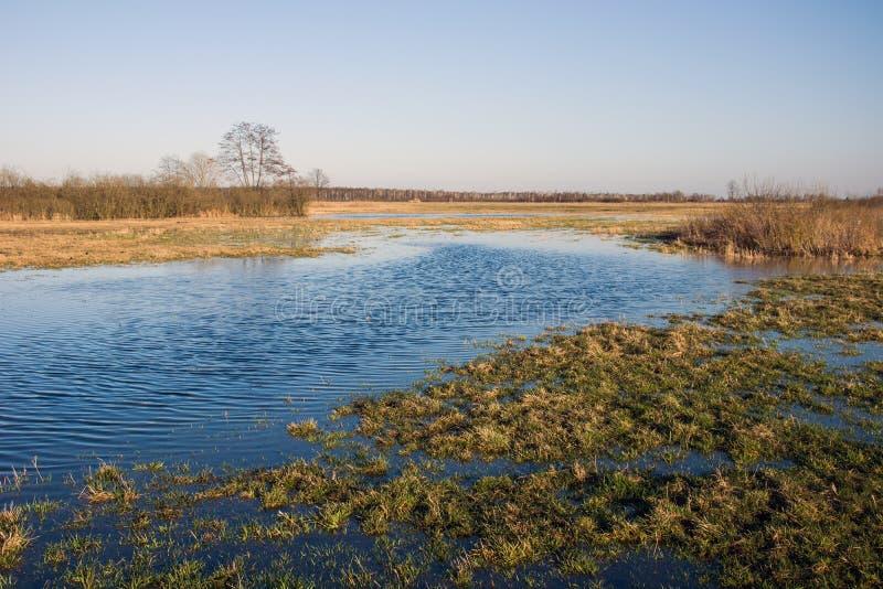 Wody zalewać dzikie łąki obrazy stock