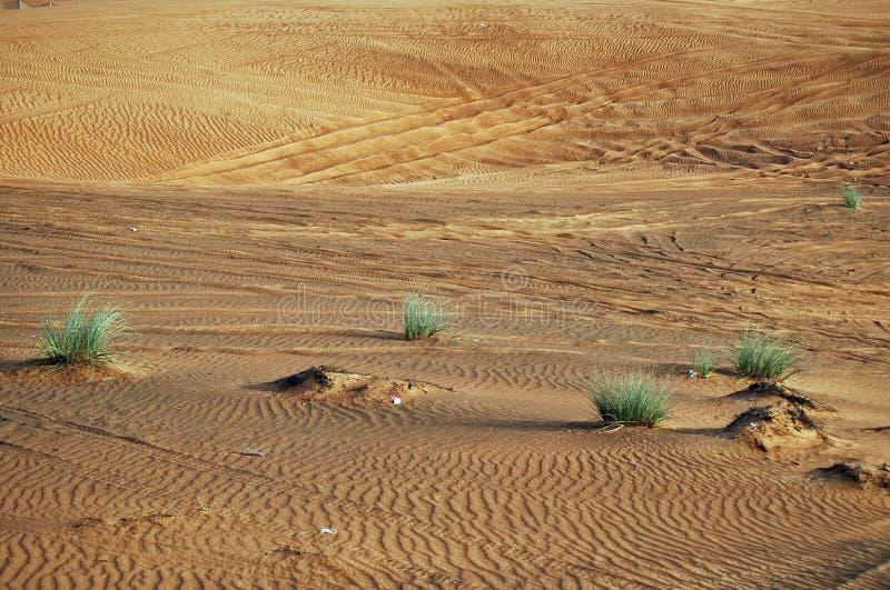 Woestijn in Doubai royalty-vrije stock afbeeldingen
