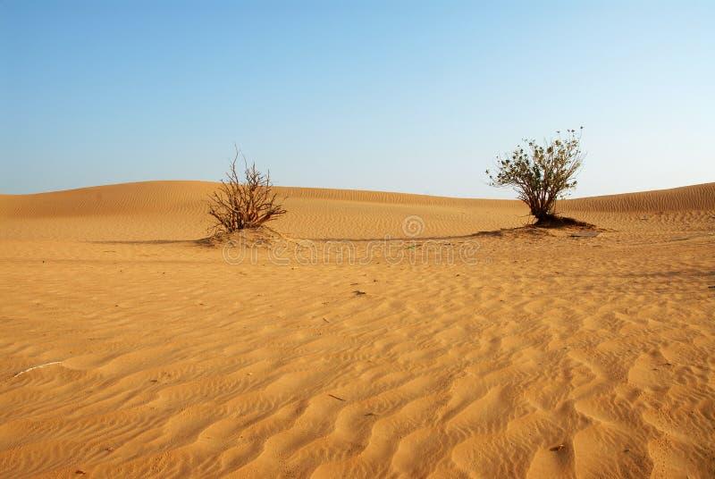 Woestijn in Doubai stock afbeeldingen
