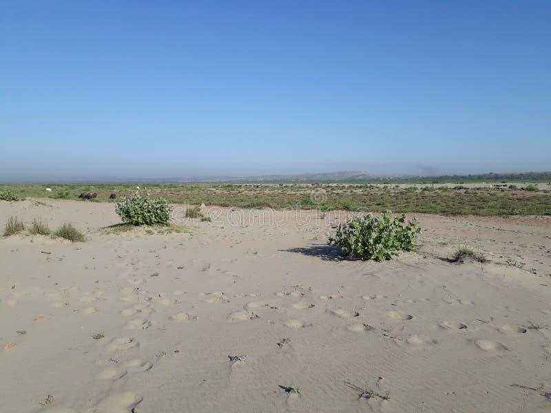 Woestijn met blauwe hemel stock foto